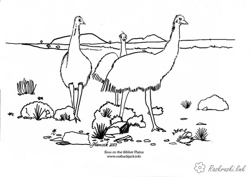 Coloring Australia coloring pages books for children, animals, ostrich, Australia