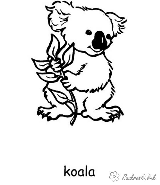 Coloring Australia coloring pages books for children, animals, Australia, the koala