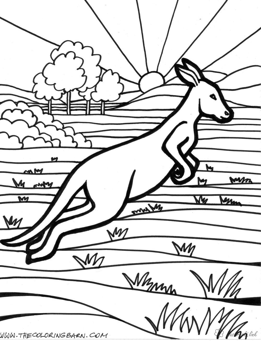 Coloring Australia coloring pages books for children, animals, Australia, kangaroo