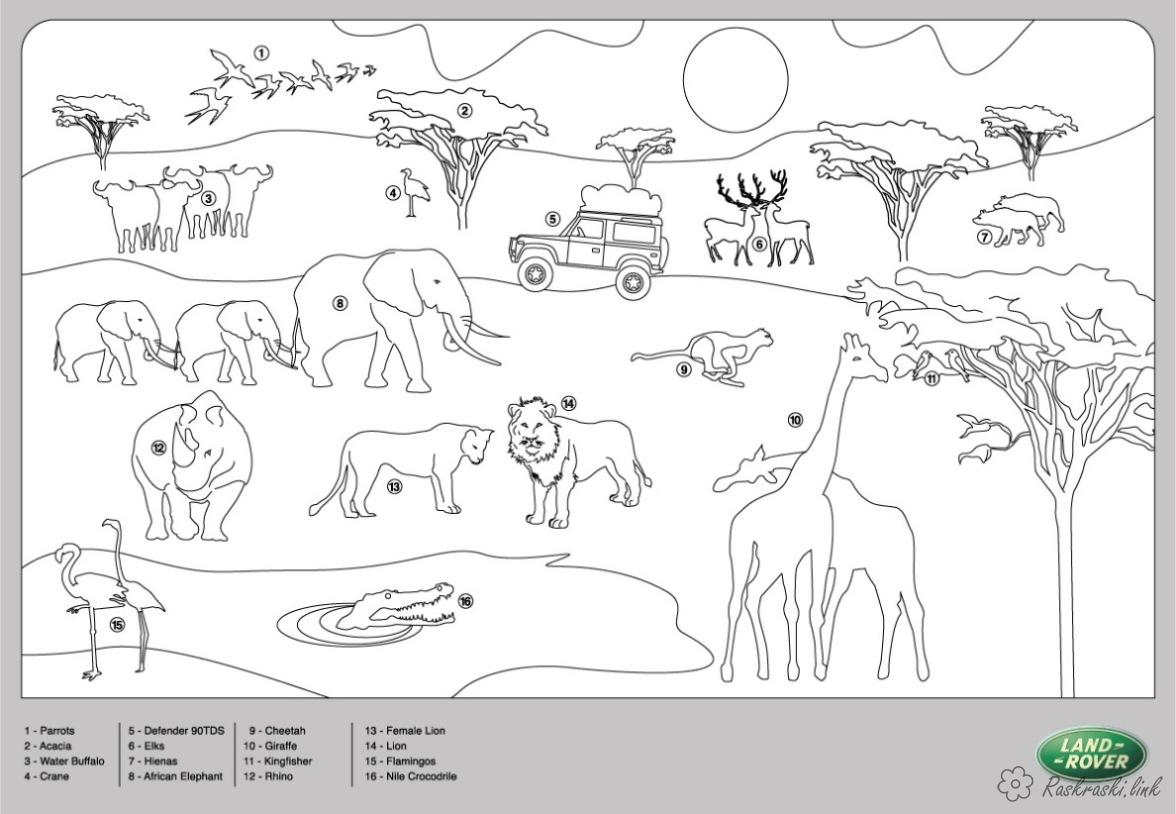 Розмальовки Африка розмальовки для дітей, тварини, Африка