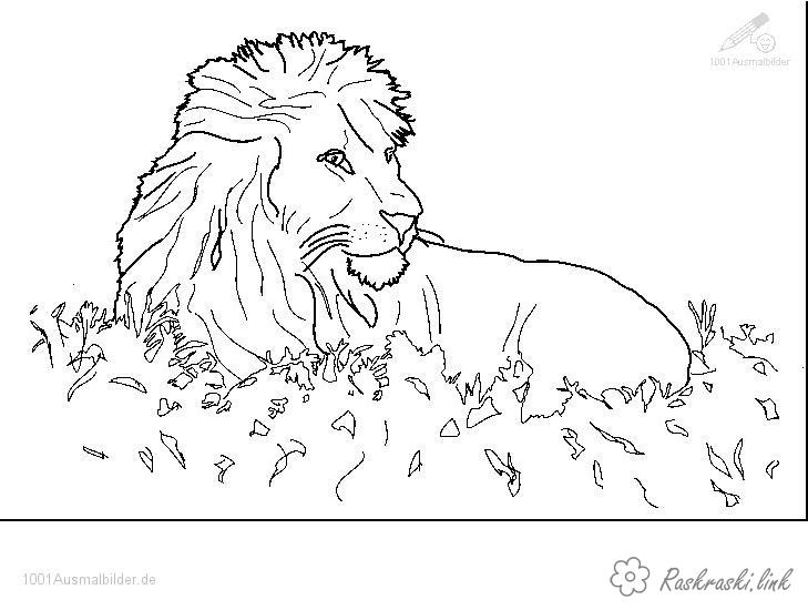Coloring children coloring pages books for children, animals, Africa, the lion
