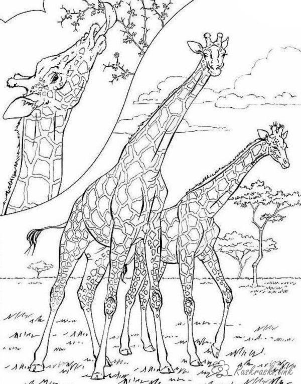 Розмальовки тварини розмальовки для дітей, тварини, Африка, жираф