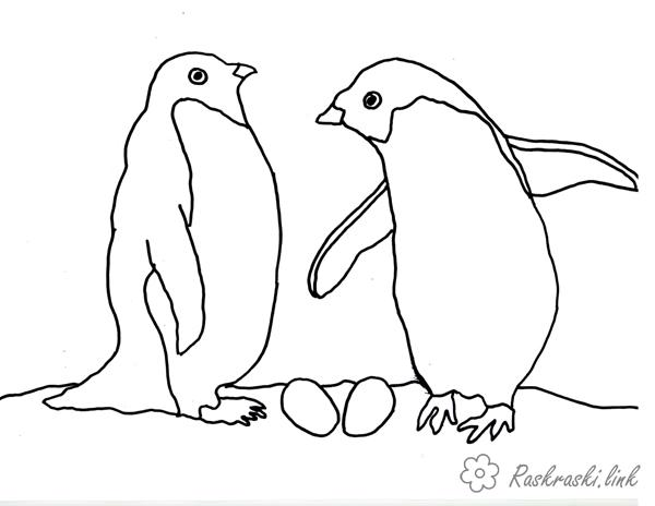 Раскраска Пингвины | Раскраски птицы для детей распечатать, скачать | 464x600
