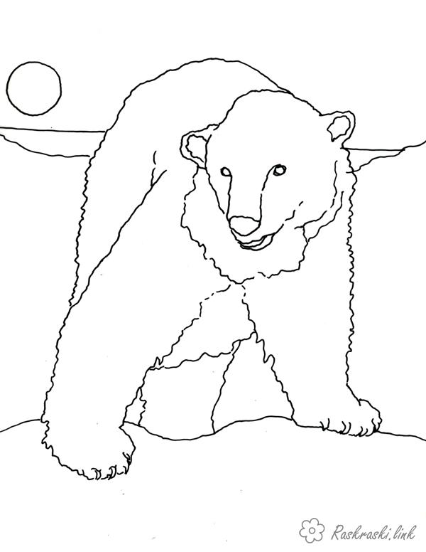 Coloring Antarctica coloring pages for kids, animal, Antarctica, the polar bear
