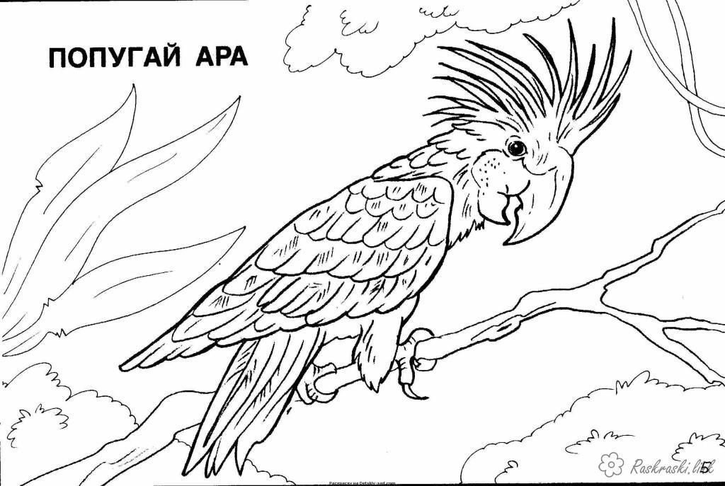 Coloring North America coloring pages books for children, animals, North America, parrot