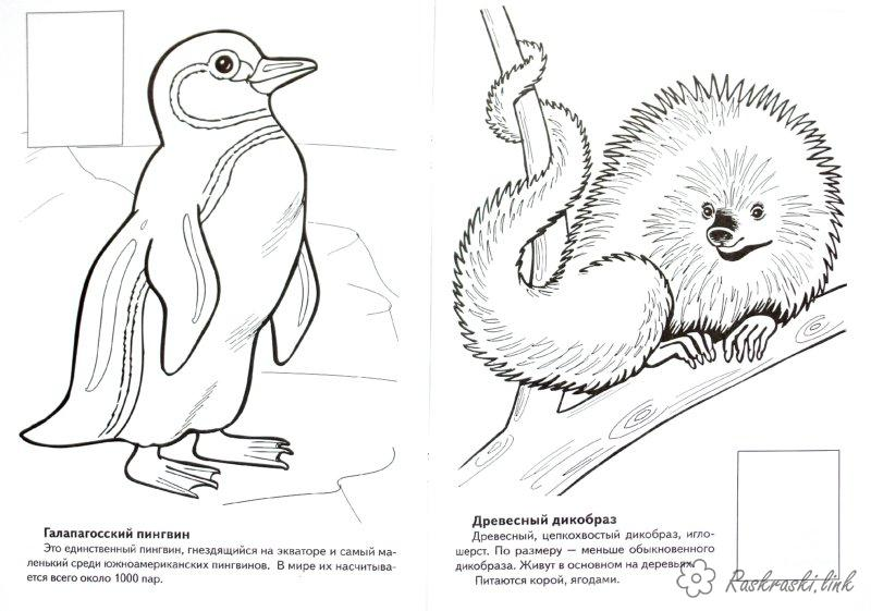 Coloring penguin coloring pages books for children, animals, North America, Penguin, porcupine