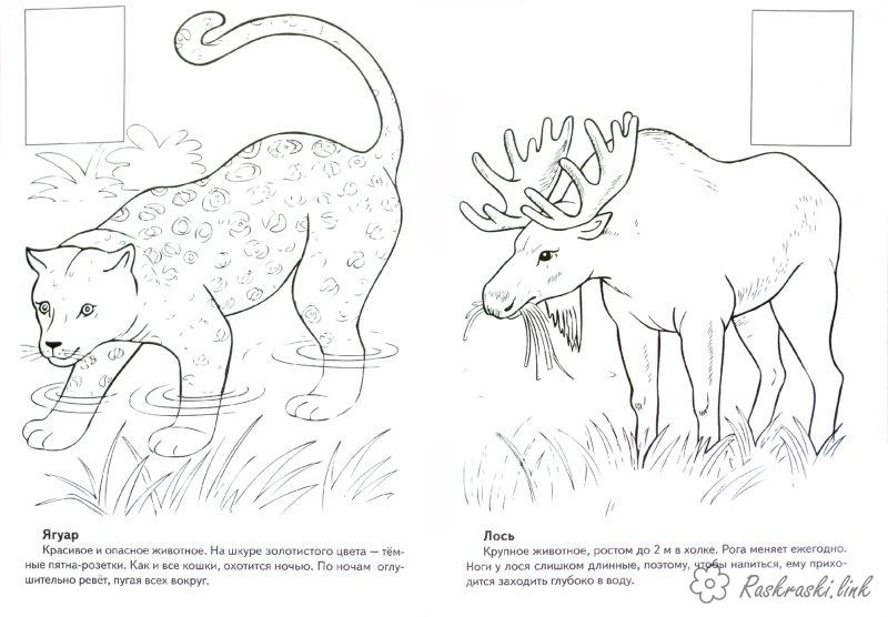 Coloring North America coloring pages books for children, animals, North America, the jaguar, elk