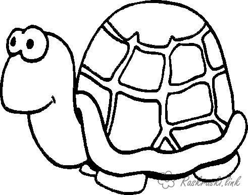 Розмальовки черепаха Проста розфарбування, черепаха