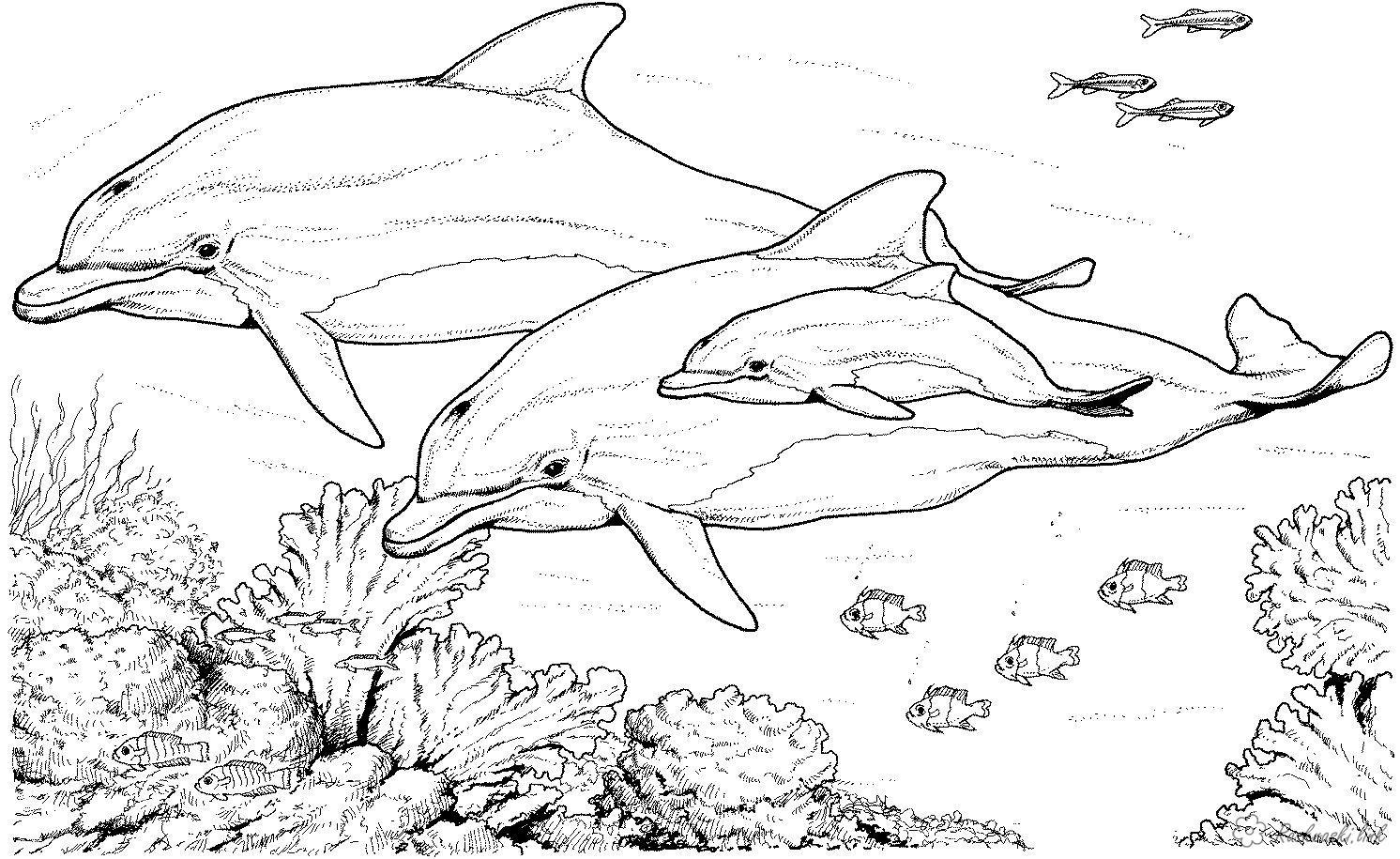Розмальовки Підводний світ Підводний світ, дельфіни, риби