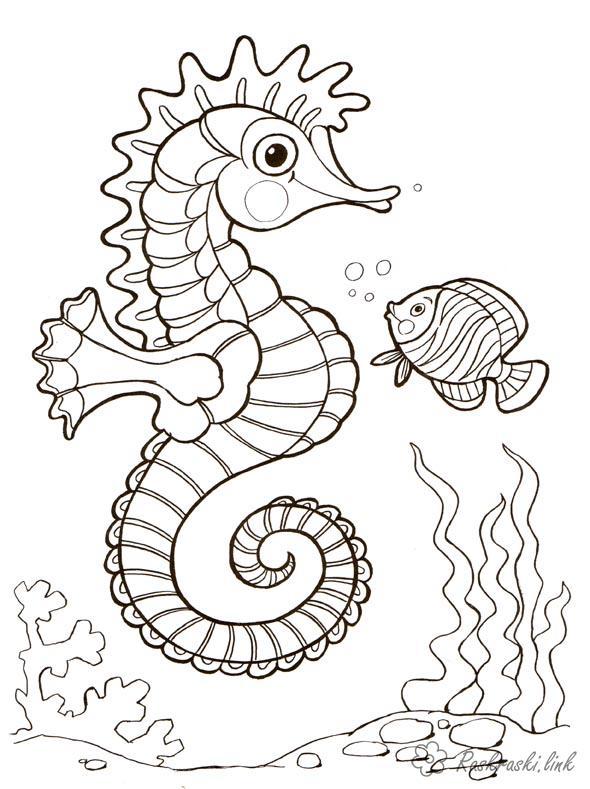 Раскраски природа Морской конек, рыбка, водоросли