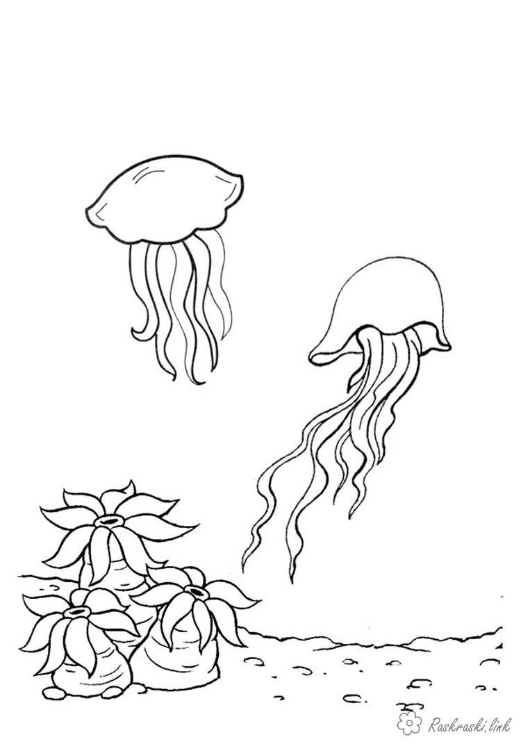 Раскраски природа Медузы, кораллы