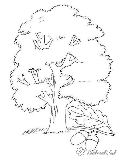 Розмальовки жолуді Дуб, жолуді