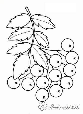 Розмальовки гілка Гілка, горобина, ягоди