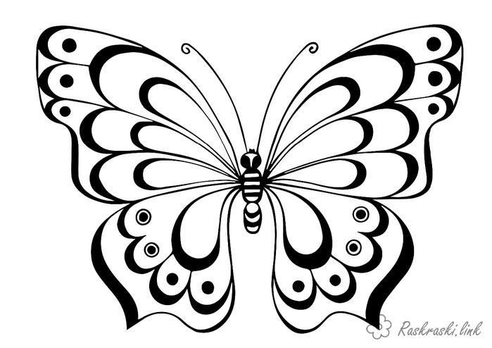 комахи Розмальовки роздрукувати бесплатно.