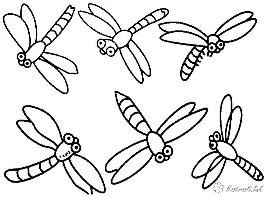Розмальовки бабка Розмальовка бабка, комахи