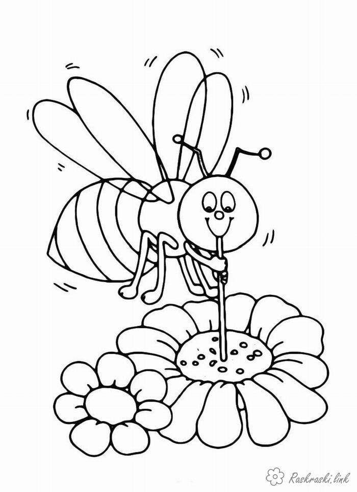 Раскраски природа Насекомые, пчелка, пчела, цветы, нектар
