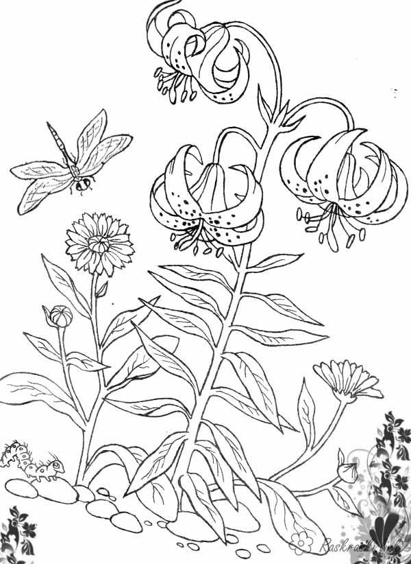 Рисунки редких растений карандашом для омоложения