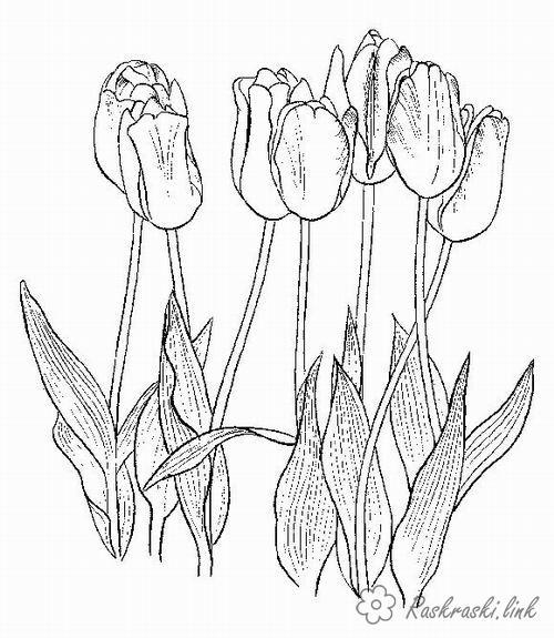 Розмальовки тюльпани розмальовки рослини, природа, квіти