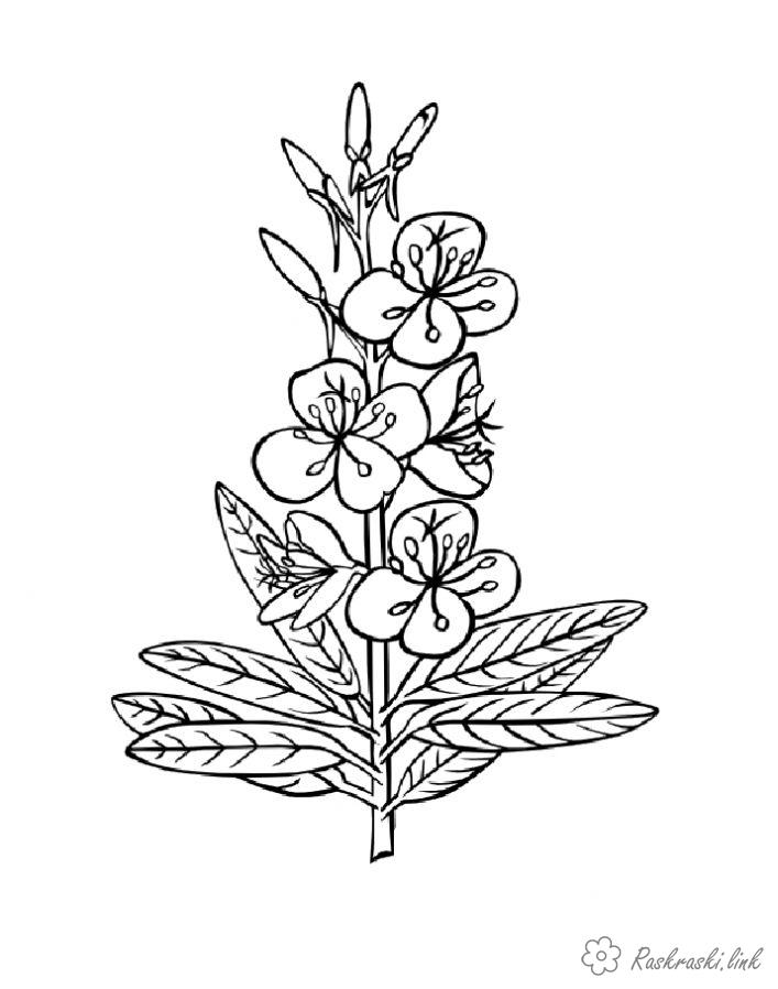 Coloring flowers coloring pages plants, nature, flowers