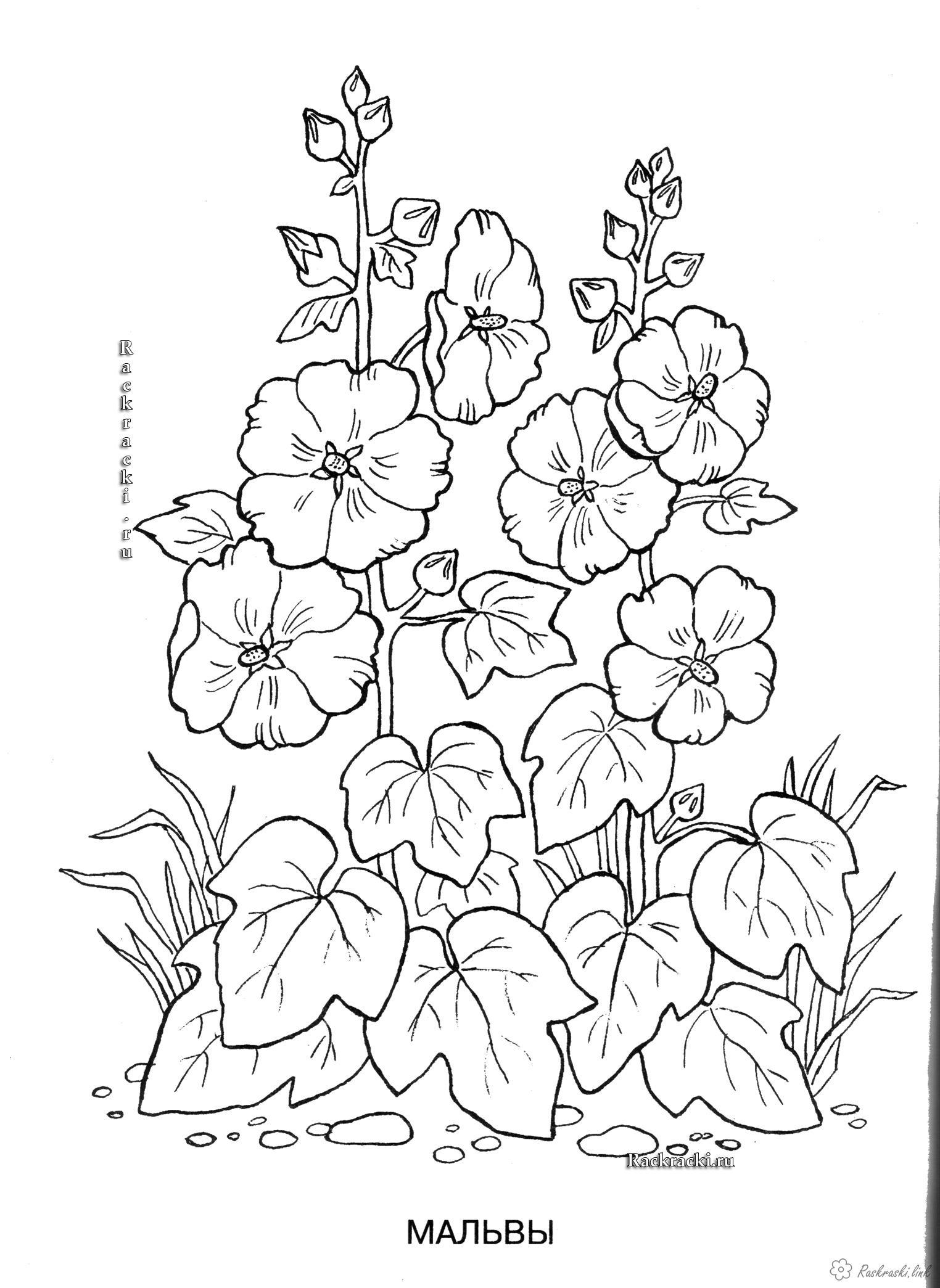 Coloring Plants coloring pages plants, nature, flowers