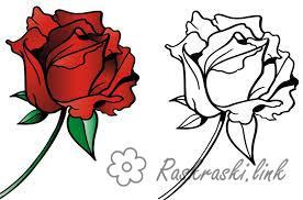 Coloring Girls Детская раскраска для детей по цвету,  роза
