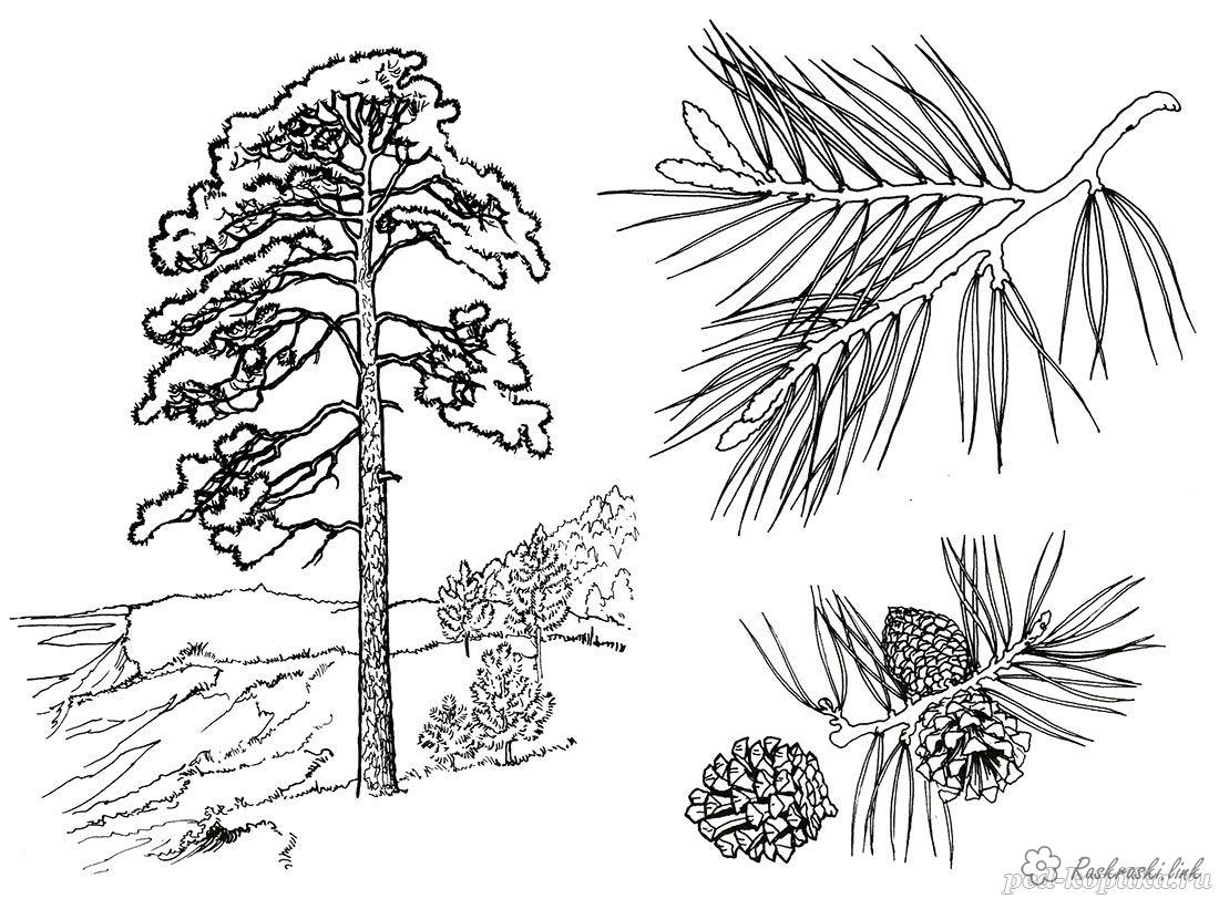 Coloring Trees coloring pages trees, paint nature, pine