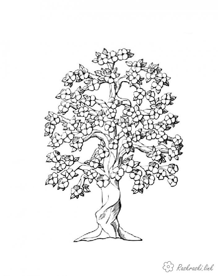 Coloring Trees coloring pages trees, paint nature, tree, flowers