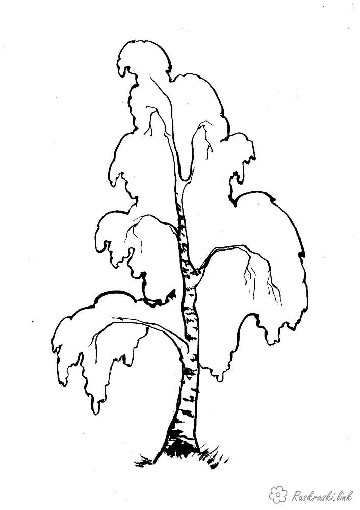 Coloring Trees coloring pages trees, paint nature, birch
