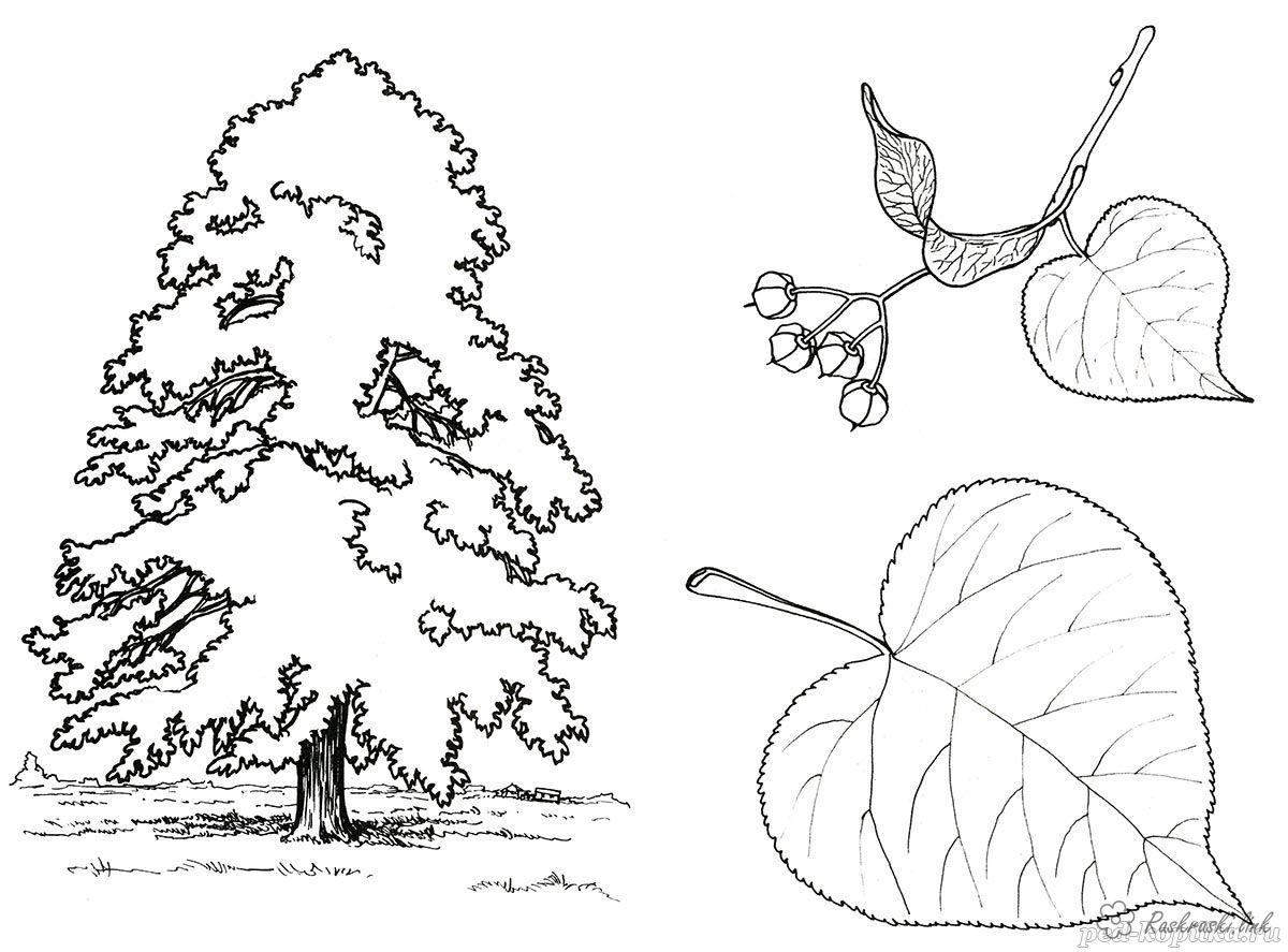 Coloring Trees coloring pages trees, paint nature, tree, leaf