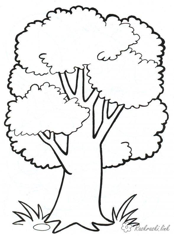 Деревья Раскраски распечатать бесплатно.