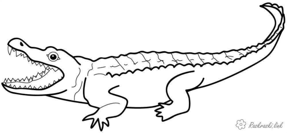 Розмальовки крокодил розмальовки рептилії, розмальовки природа, тварини, крокодил