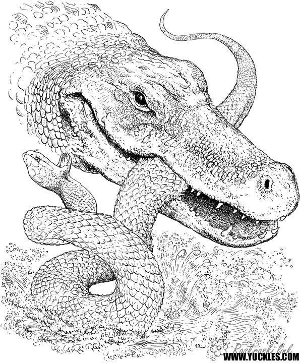 Розмальовки крокодил розмальовки рептилії, розмальовки природа, крокодил, змія