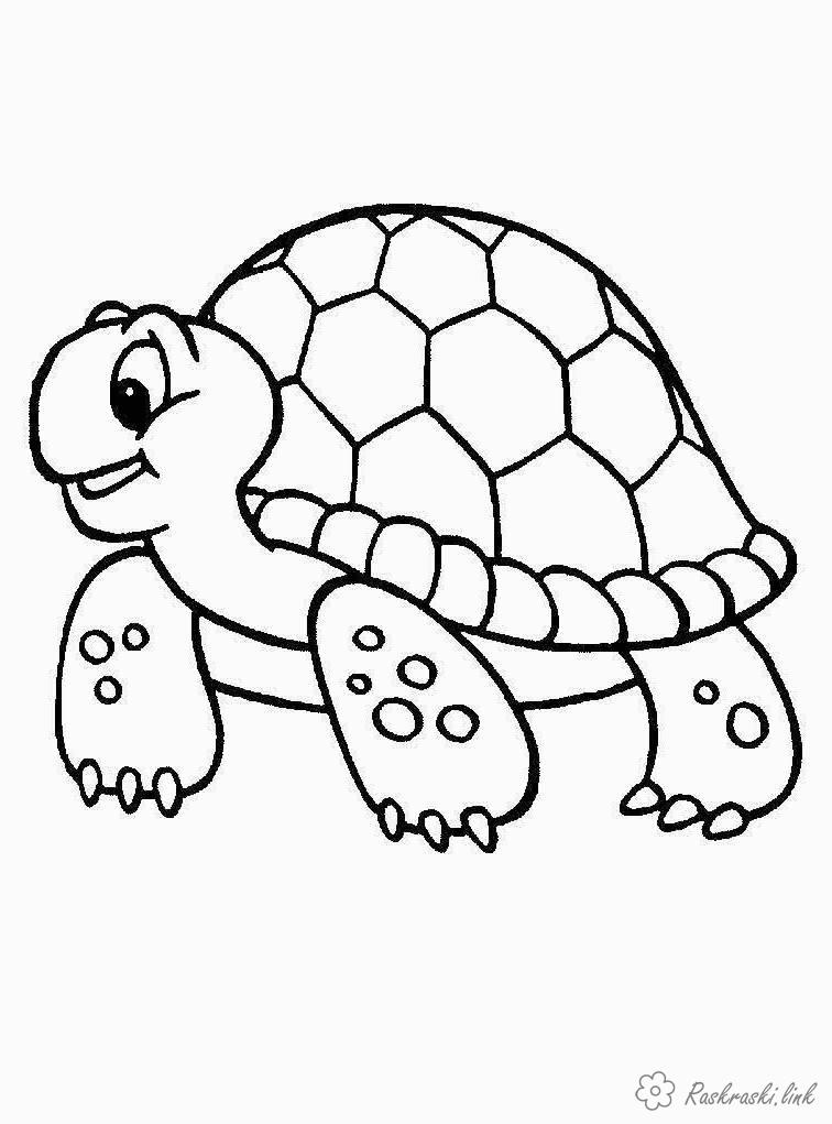 Розмальовки черепаха розмальовки рептилії, розмальовки природа, тварини, черепаха
