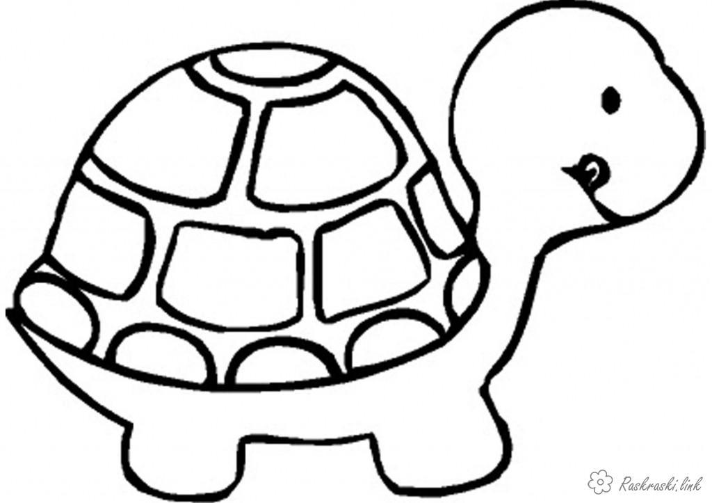 Розмальовки черепаха розмальовки рептилії, розмальовки природа, розмальовки малюкам, черепаха