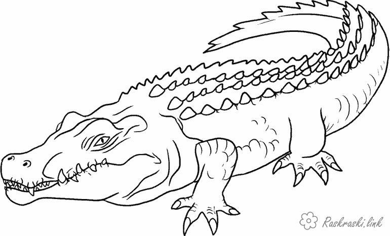 Раскраски Рептилии Рептилии, крокодил, хищник