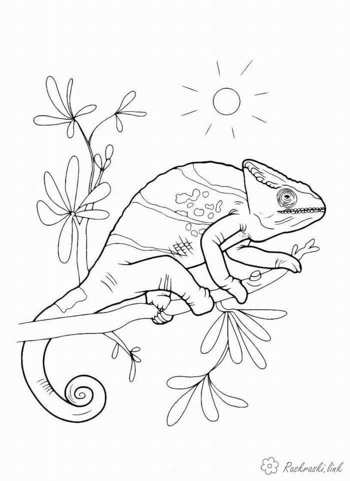 Розмальовки гілка Рептилії, хамелеон, гілка, сонце
