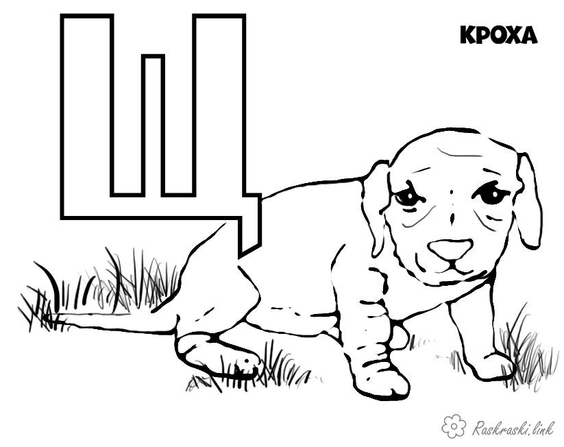 Розмальовки Розмальовки букви алфавіту щеня розфарбування буква Щ