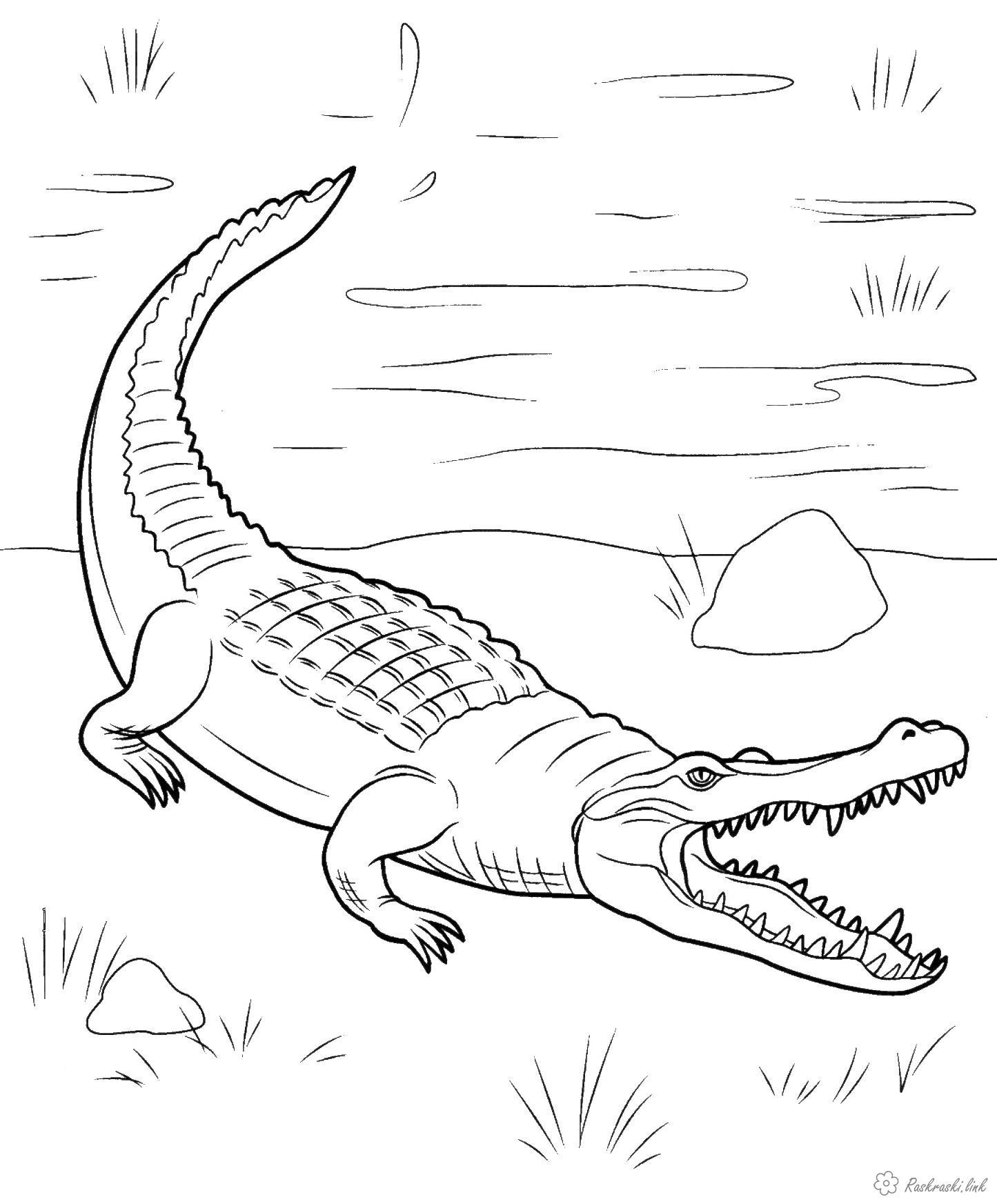 Розмальовки крокодил Рептилії, крокодил, вода