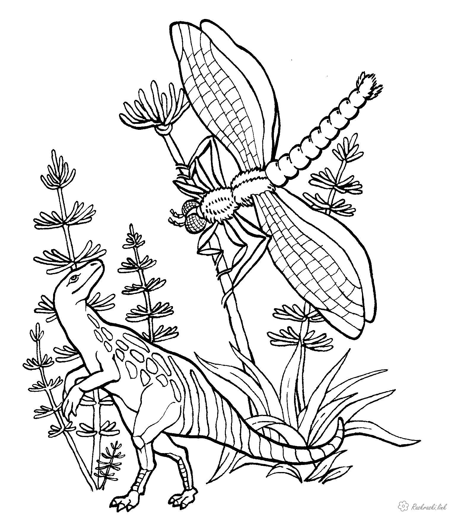 Розмальовки бабка Рептилії, динозавр, комахи, бабка