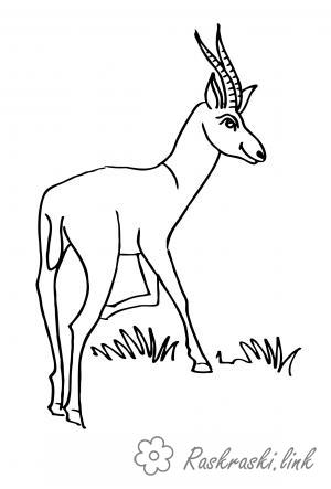 Розмальовки золота золота антилопа розмальовки радянські мультфільми