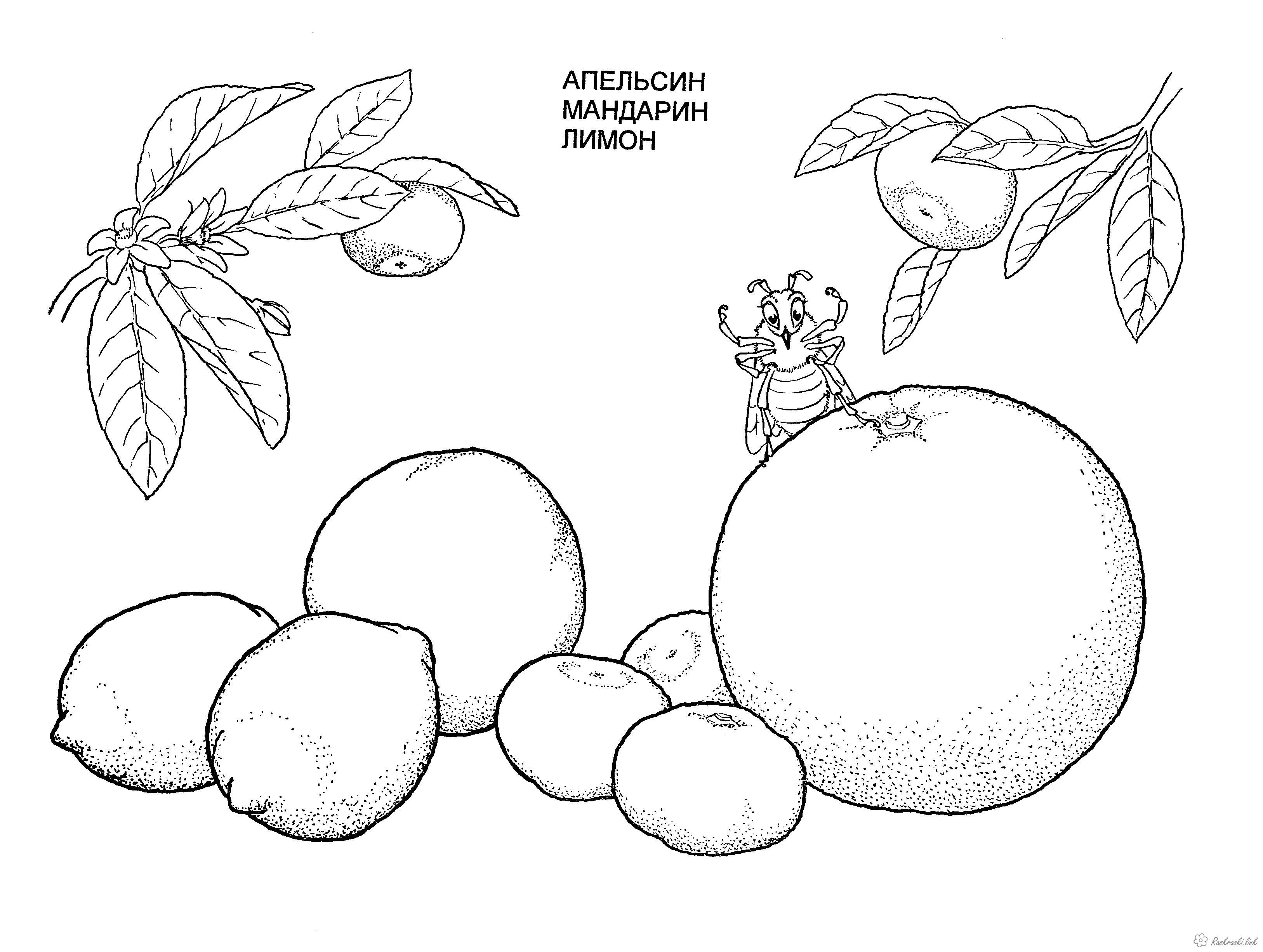 Розмальовки дитяча Дитяча розфарбування рослини, фрукти