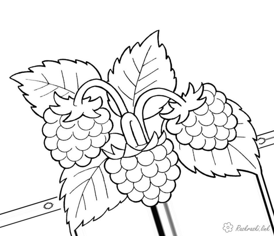 Раскраски природа Детская раскраска растения  груша