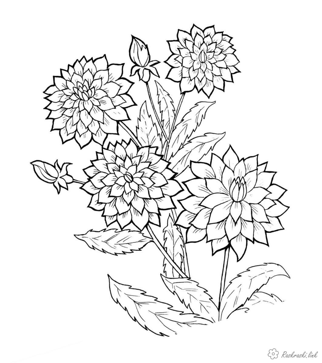 Растения Раскраски распечатать бесплатно.