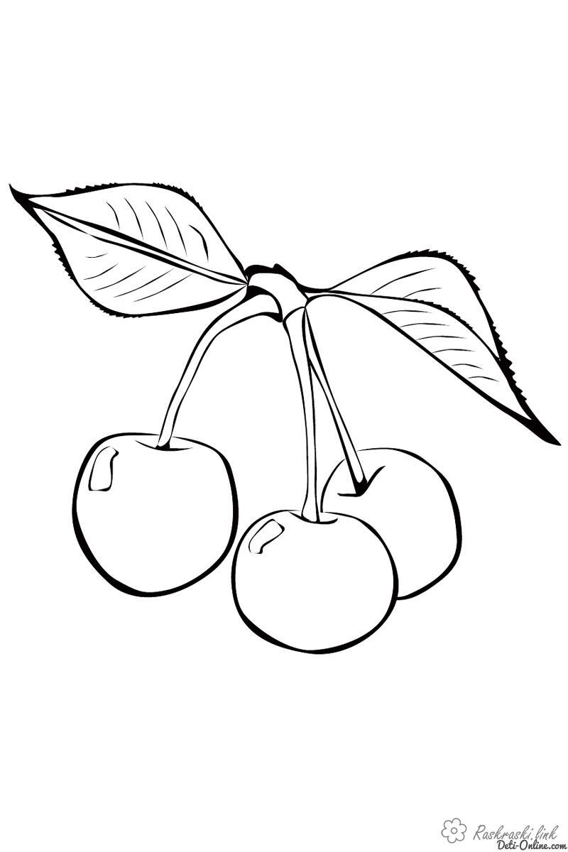 Раскраски вишня Детская раскраска растения,  вишня