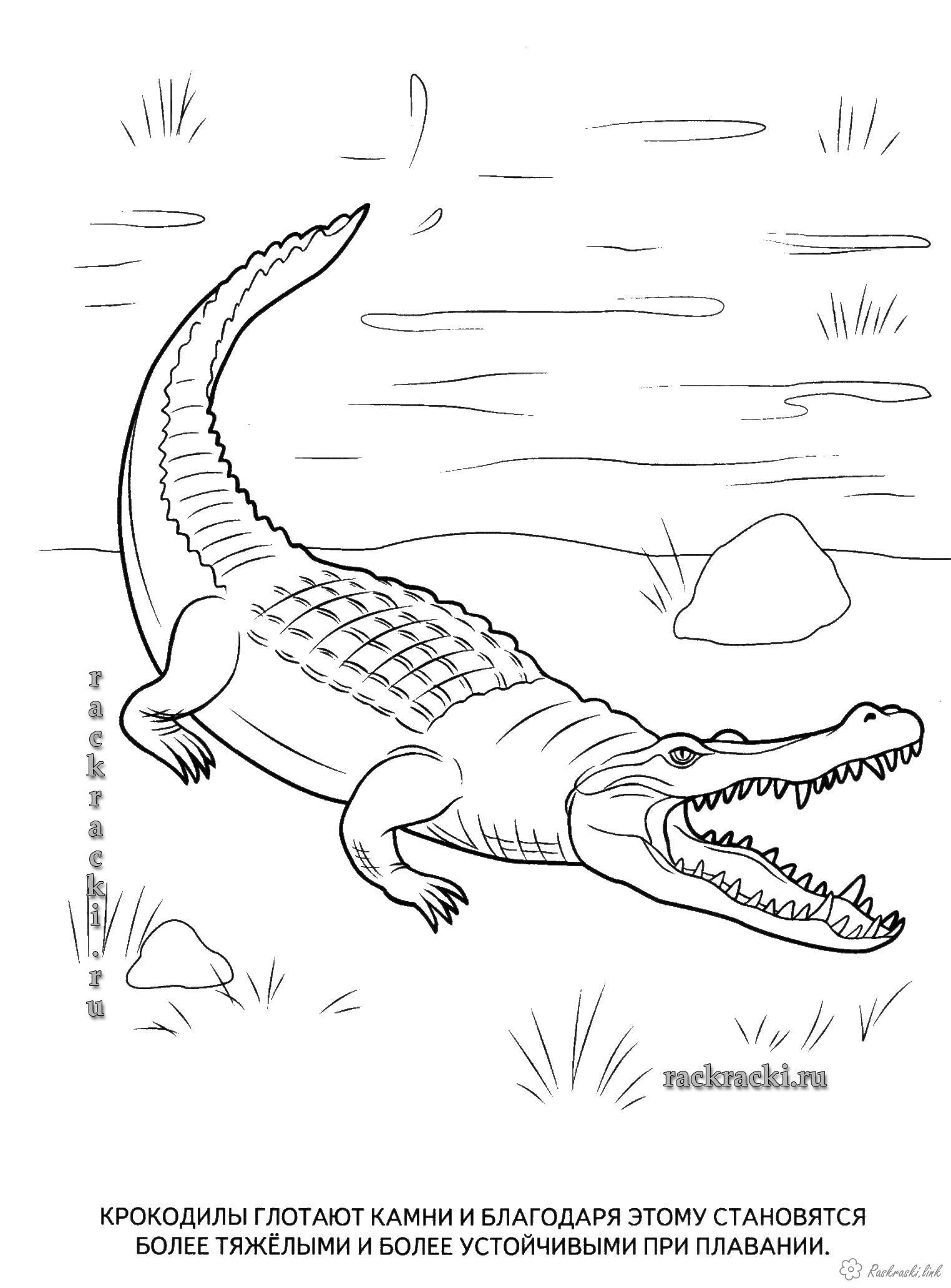 Розмальовки крокодил Дитяча розфарбування рептилії, крокодил