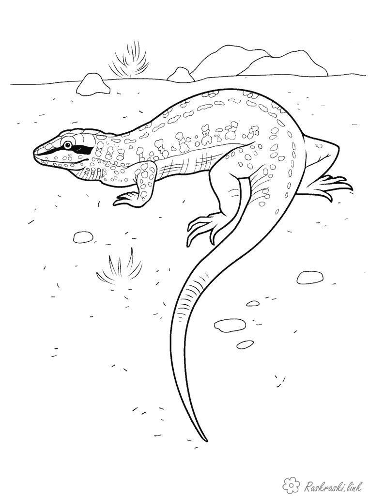 Раскраски Рептилии раскраска ящерица