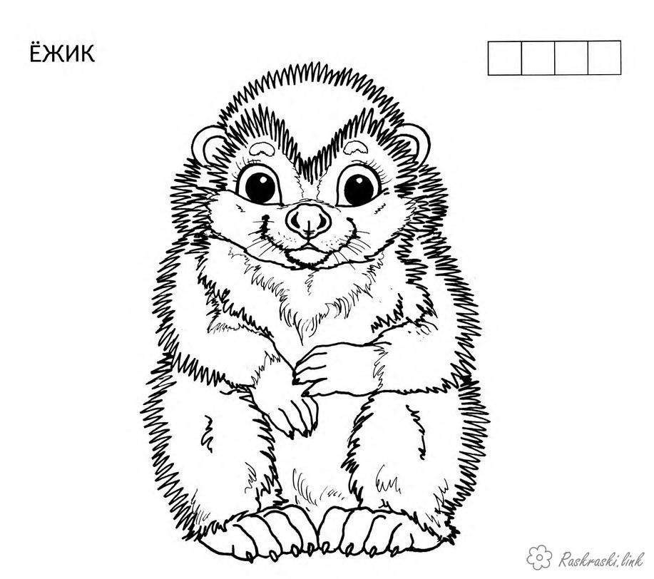 Coloring beasts coloring pages for kids, forest animals, animals, hedgehog