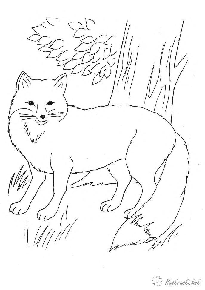 Раскраски природа раскраски, животные, природа, лисицы