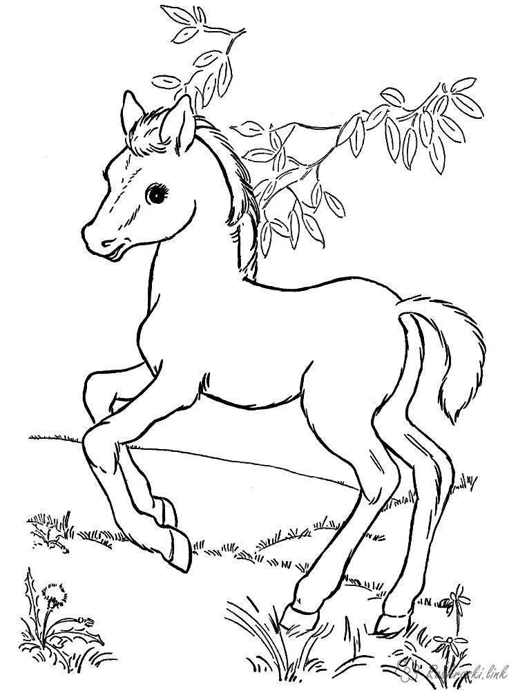 Раскраски природа Раскраски животных, дикие звери, лошадка, лес, природа