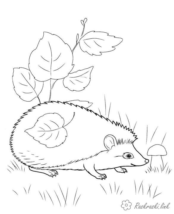Розмальовки ліс Розмальовка для дітей, їжачок і гриби, ліс, трава